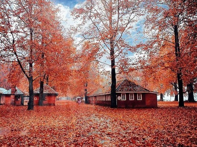 Autumn Packages
